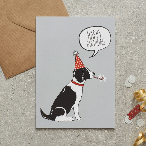 Springer Spaniel (Black & White) Birthday Card